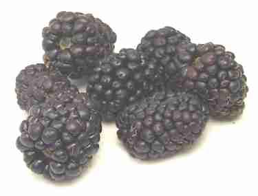Berries - Vårdsvenska - Swedish for health care personnel